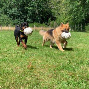 Pension chiens avec activités