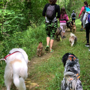 Pension pour chien avec activités et sortis