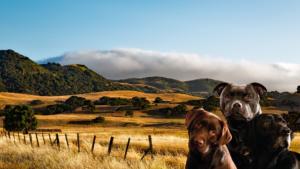 Pension pour chiens en Dordogne