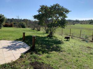 Pension pour chiens O Ranch Canin Dordogne
