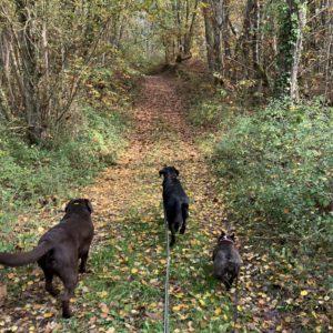 balade pension pour chiens dordogne