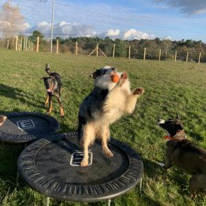 parc activité pour pension chien